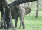 Hide and Seek - Selous National Park