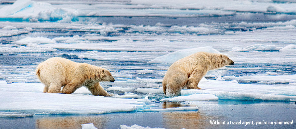 polar-bear-on-ice-960